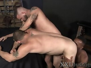 gays Bear spermed by bbc bigdick